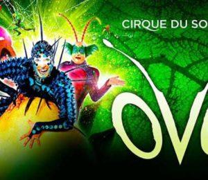 """""""OVO"""" el nuevo espectáculo del Cirque du Soleil en Buenos Aires"""